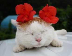 做梦梦见猫 梦见猫是什么意思